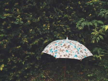 Umbrellareef