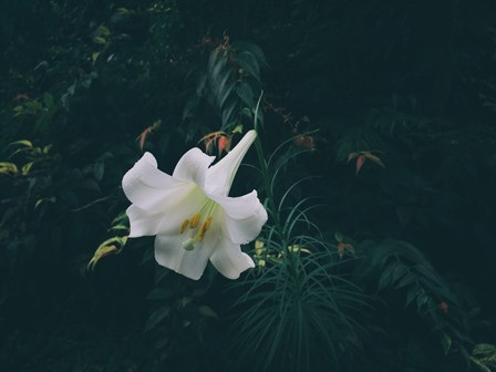 Sahanji_garden