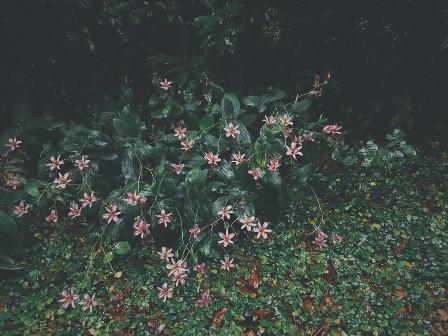 Sahanji_garden10gatu
