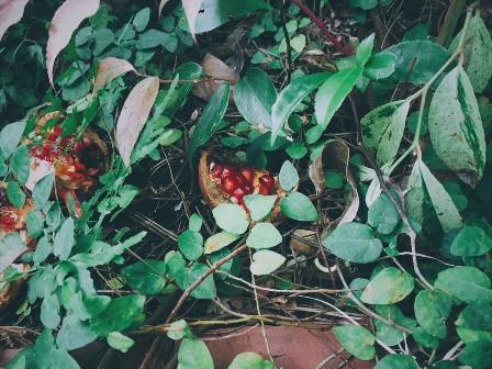 Sahanji_garden10gatu2